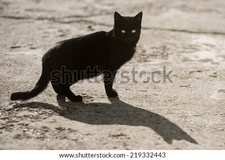 Black cat with yellow eyes and big shadow - stock photo