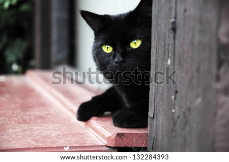 Black cat with yellow eyes lying in the door - stock photo