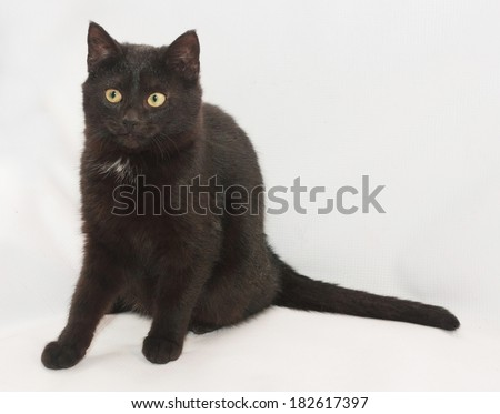 Black cat with yellow eyes sitting, looking in disbelief, on gray background - stock photo