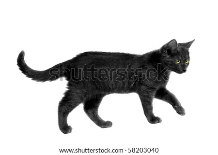 Black cat with yellow eyes walking on white - stock photo