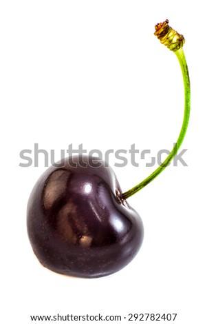 Black cherry isolated on white background - stock photo