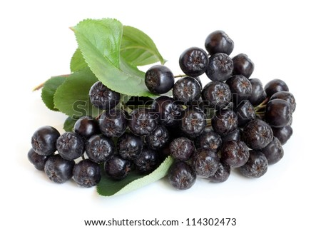 Black chokeberry on a white background - stock photo