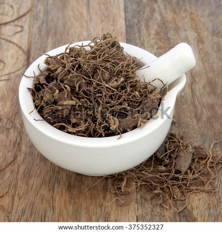 Black cohosh root herb used in natural alternative herbal medicine over old wood background. Used to treat menopausal and pre menstrual symptoms in women. Actaea racemosa. - stock photo