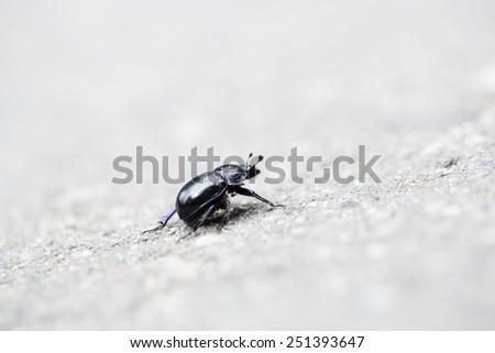 Black coloured bug on the asphalt grey backgroung - stock photo