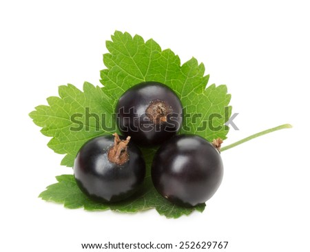 black currant isolated on the white background - stock photo