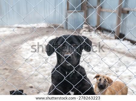 Black dog and puppies are behind metal silver grid in shelter - stock photo