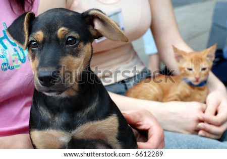 Black dog and yellow cat in friends hands - stock photo