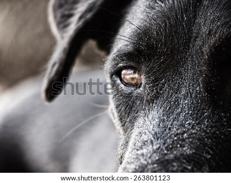 black dog face close-up, with sand at the beach - stock photo