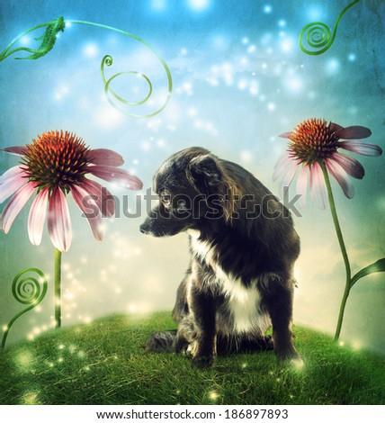 Black dog in a fantasy hilltop landscape with echinacea flowers - stock photo