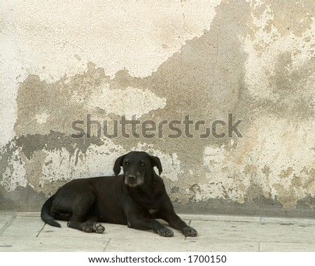 Black dog in the street in Mexico - stock photo