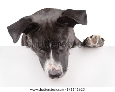 Black dog looking down and leaning on panel isolated on white - stock photo