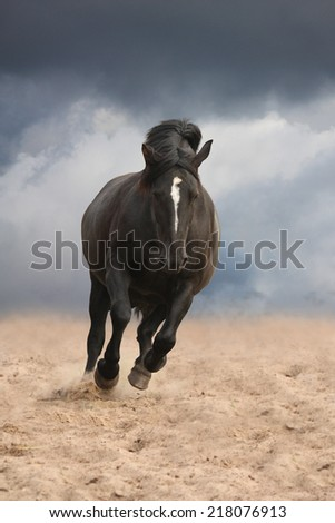 Black draught horse cantering free on desert background - stock photo