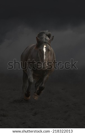 Black draught horse running-galloping  in the night - stock photo