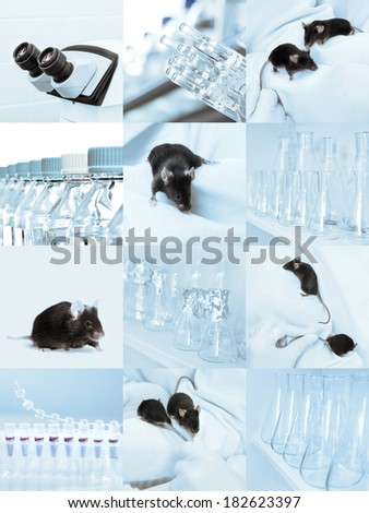 Black experimental mice, microscope and laboratory glassware, set of sqiare tinted images - stock photo