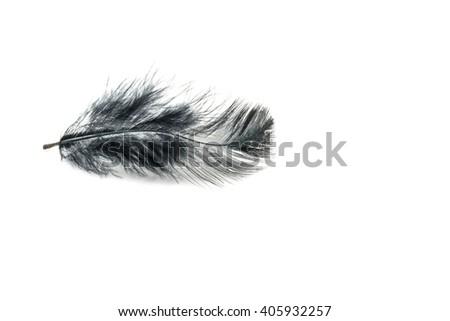 Black feather on white background - stock photo