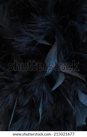 black feathers - stock photo