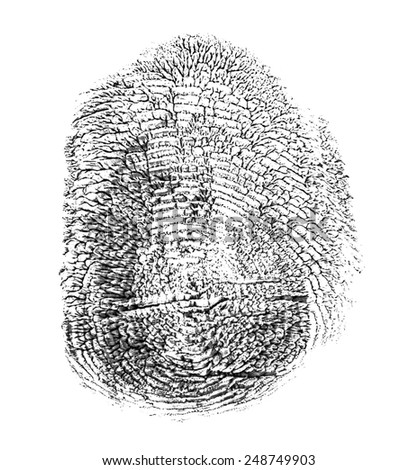 black finger print isolated on white background - stock photo