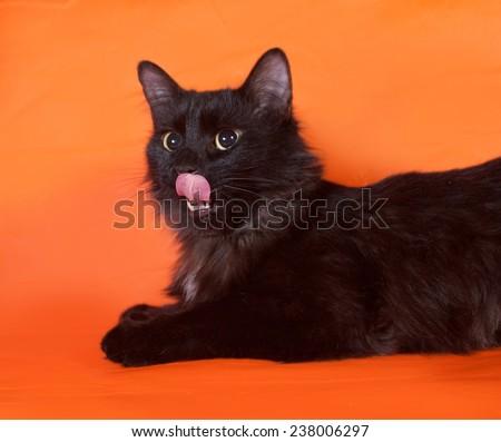 Black fluffy cat lying on orange background - stock photo