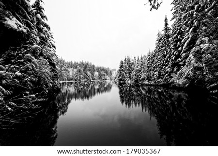 Black Forest and Snow - stock photo
