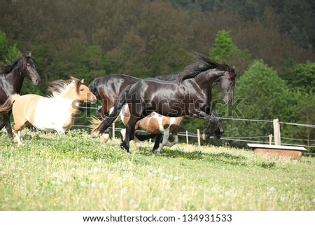 Black Friesian horse jumping while its ahead - stock photo