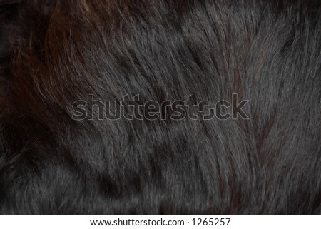 Black fur hair texture. - stock photo