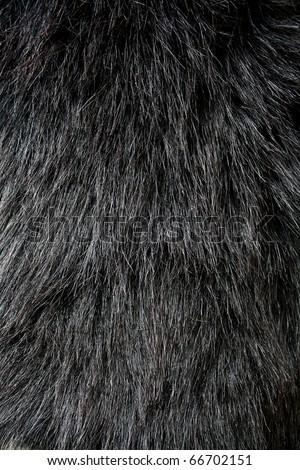 Black fur texture Closeup of beautiful. Useful as background - stock photo