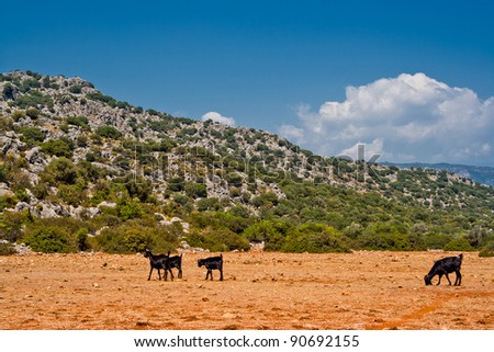 black goats in the wildness Turkish valley - stock photo