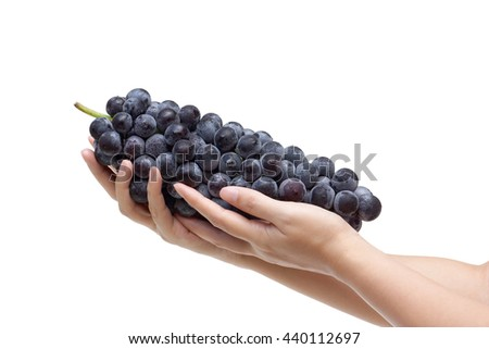 Black grapes. Beautiful female hand holding a big bunch of black grapes - stock photo