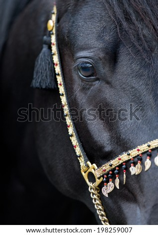 Black horse eye - stock photo