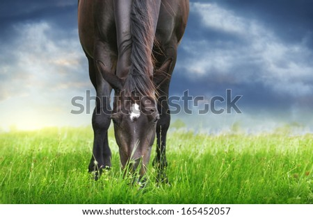 Black horse grazing in pasture against background of stormy sky - stock photo