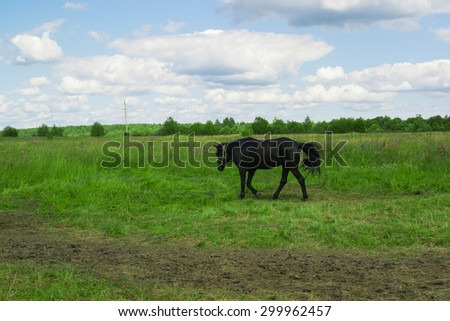 black horse grazing in the meadow and eat grass - stock photo
