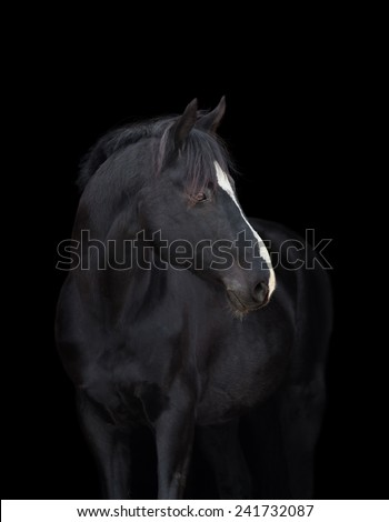 Black horse head close up, on black background, isolated. - stock photo