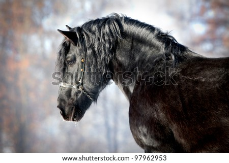 Black horse in forest - stock photo