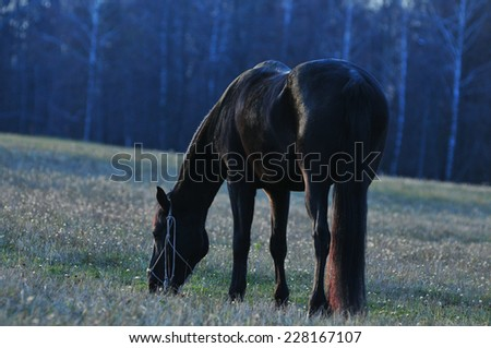 Black horse in the meadow  - stock photo