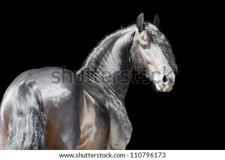 Black horse isolated on the black background - stock photo