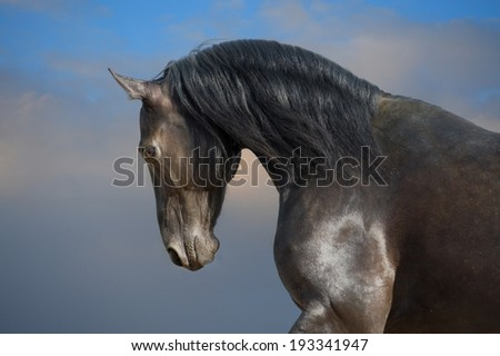 Black horse portrait on the storm clouds background - stock photo