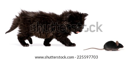 Black Kitten on a white background - stock photo