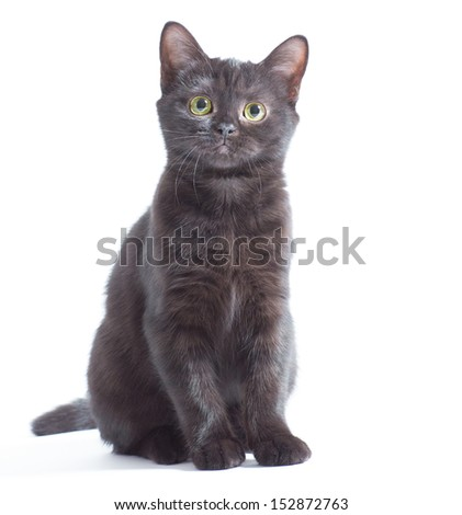 Black kitten sitting and watching on the looker, isolated on white - stock photo