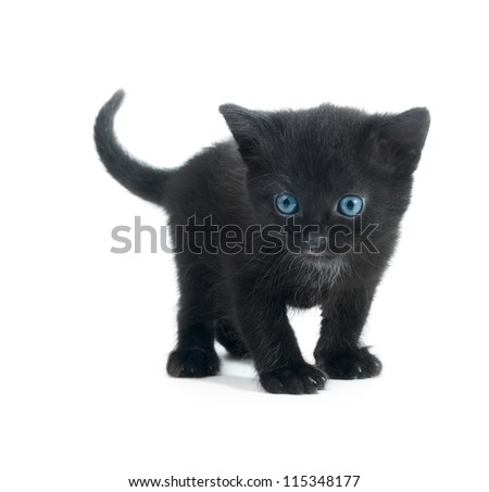 black kitten with blue eyes isolated on white background - stock photo