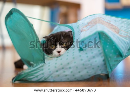 Black kitty cat in a tent - stock photo