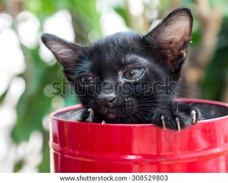 Black little kitten in red metal bucket, selective focus on its eye - stock photo