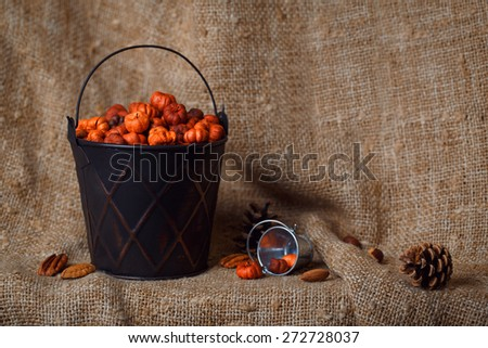Black metallic shiny bucket with tiny putka pumpkin pods. Nuts, pine cones on canvas background. Autumn fall still life card, harvest - stock photo
