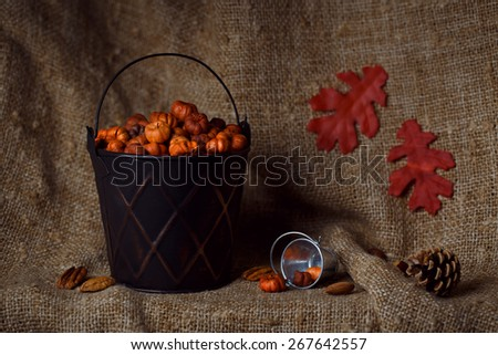 Black metallic shiny bucket with tiny putka pumpkin pods. Nuts, pine cones, red maple leaves on canvas background. Autumn fall still life card in low key - stock photo