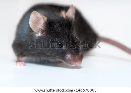 Black mouse on light background - stock photo