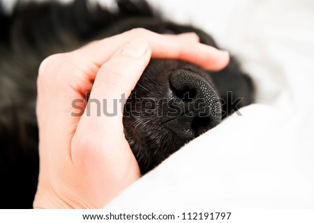 Black Nose of Large Dog Held by Human Hand - stock photo