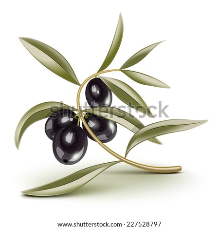 Black olives on a branch - stock photo