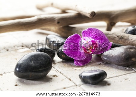 black pebbles with orchid for beauty atmosphere - stock photo