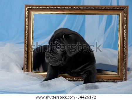 black puppy with picture frame - stock photo