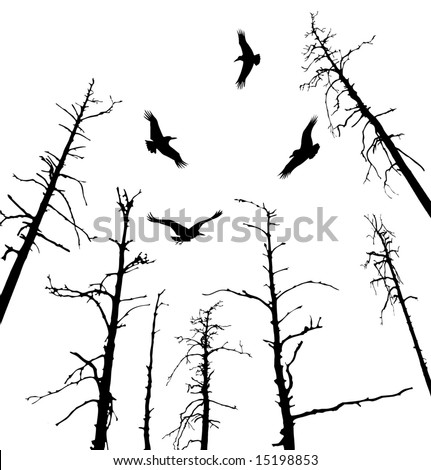 Black ravens fly on dead tree. The Ecological catastrophe. - stock photo