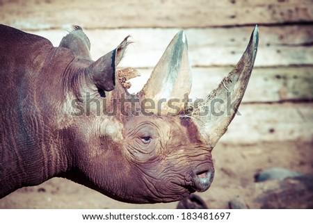Black rhino head over blurred background. - stock photo